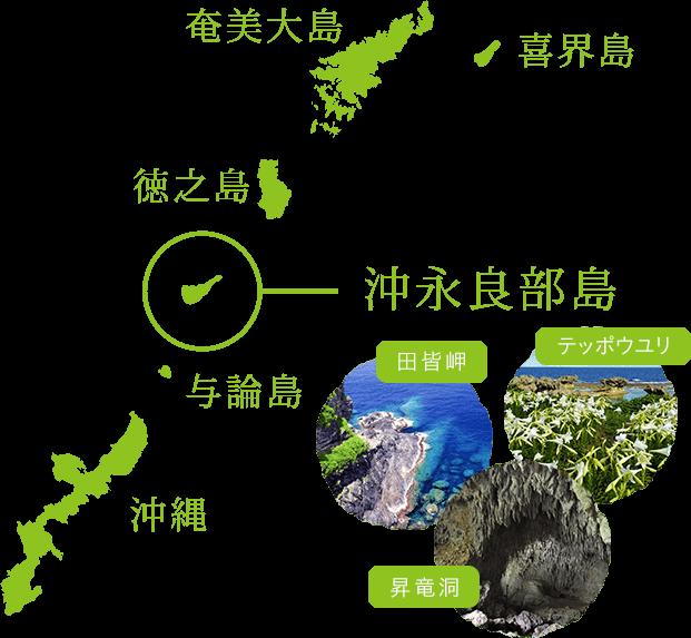 奄美大島 喜界島 徳之島 沖永良部島 与論島 沖縄 テッポウユリ 鍾乳洞